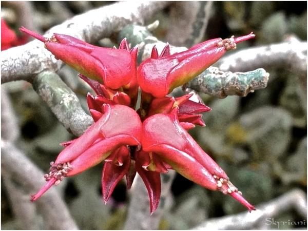 Surreal Flower