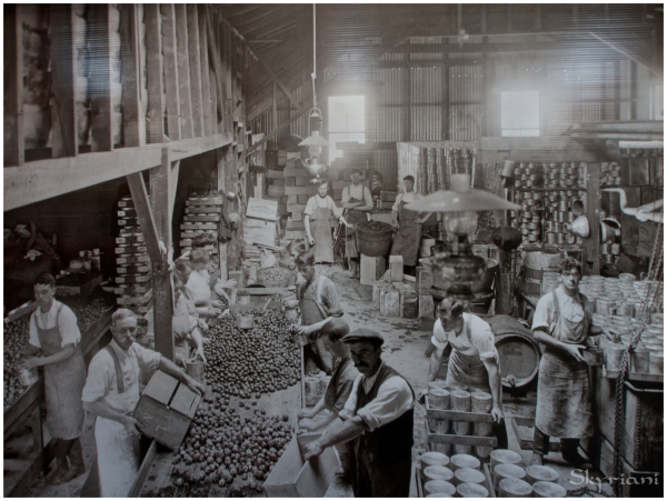 Nelson's cannery
