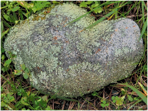 Rock and Lichen II