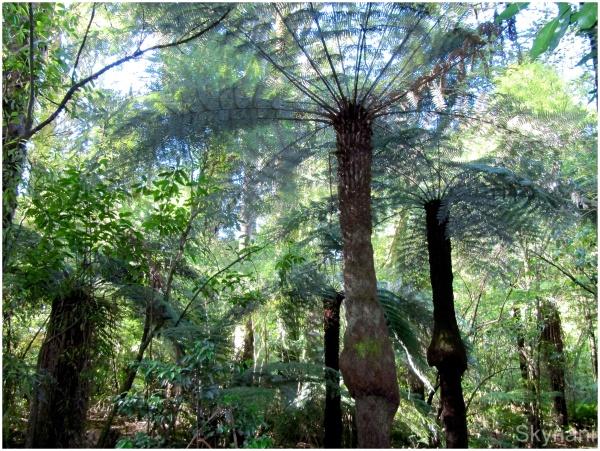 Treeferns I