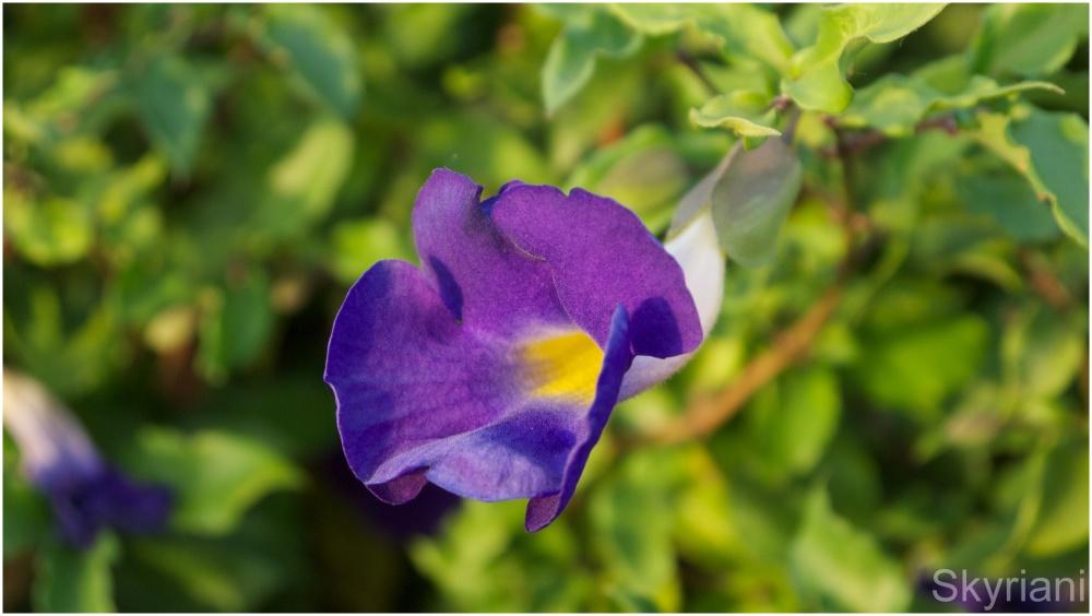 Intensely Purple
