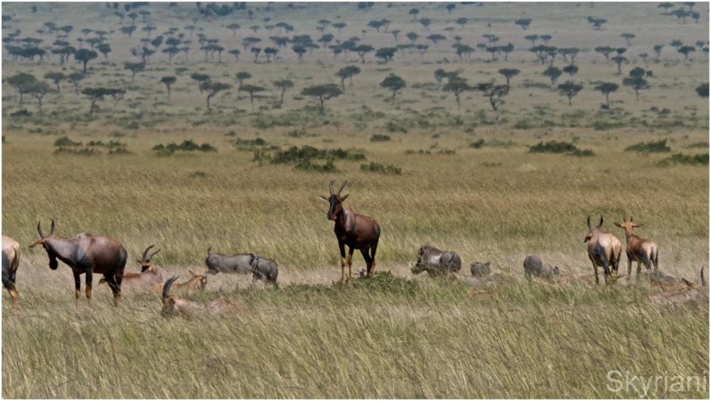 Topi and Warthogs