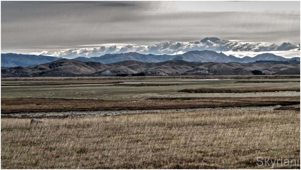 NZ Vista