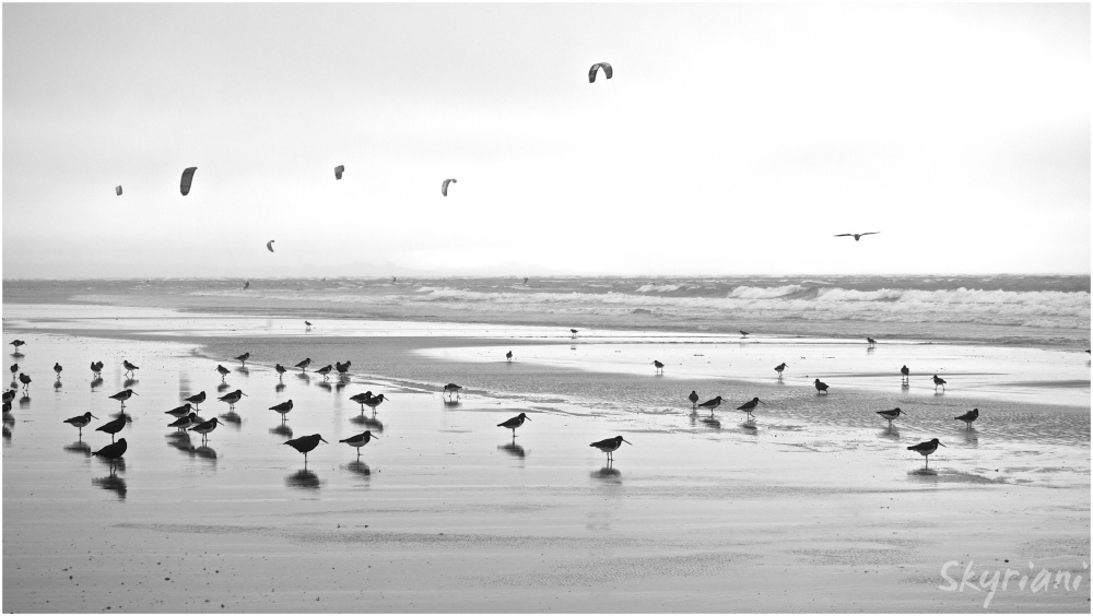 Surfers and Oystercatchers