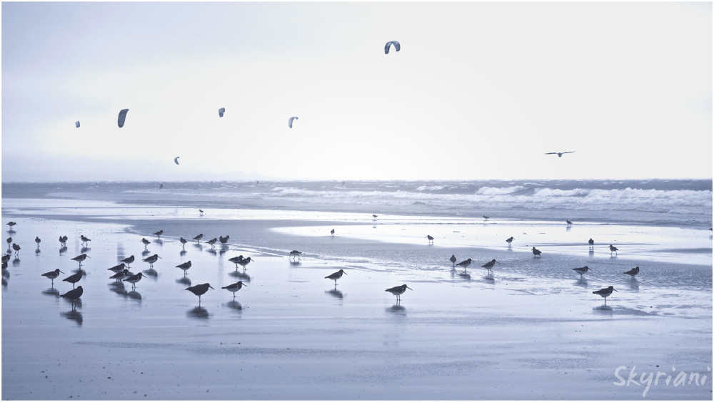 Surfers and Oystercatchers II