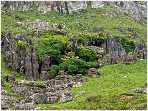 Nikau and Rock