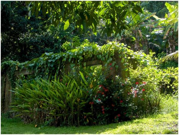 Rainforest House I