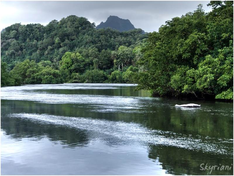 Mangrove Channel