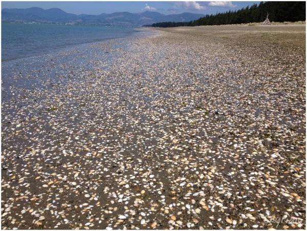 Shell Beach V