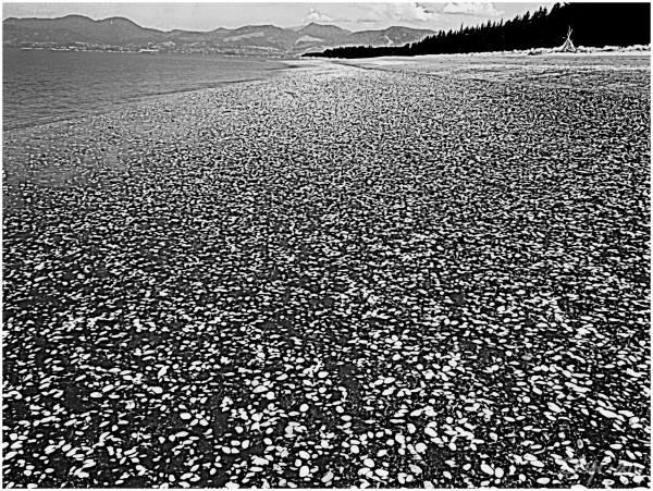 Shell Beach III