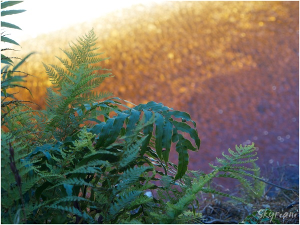Ferns over Water