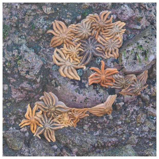 Reef stars