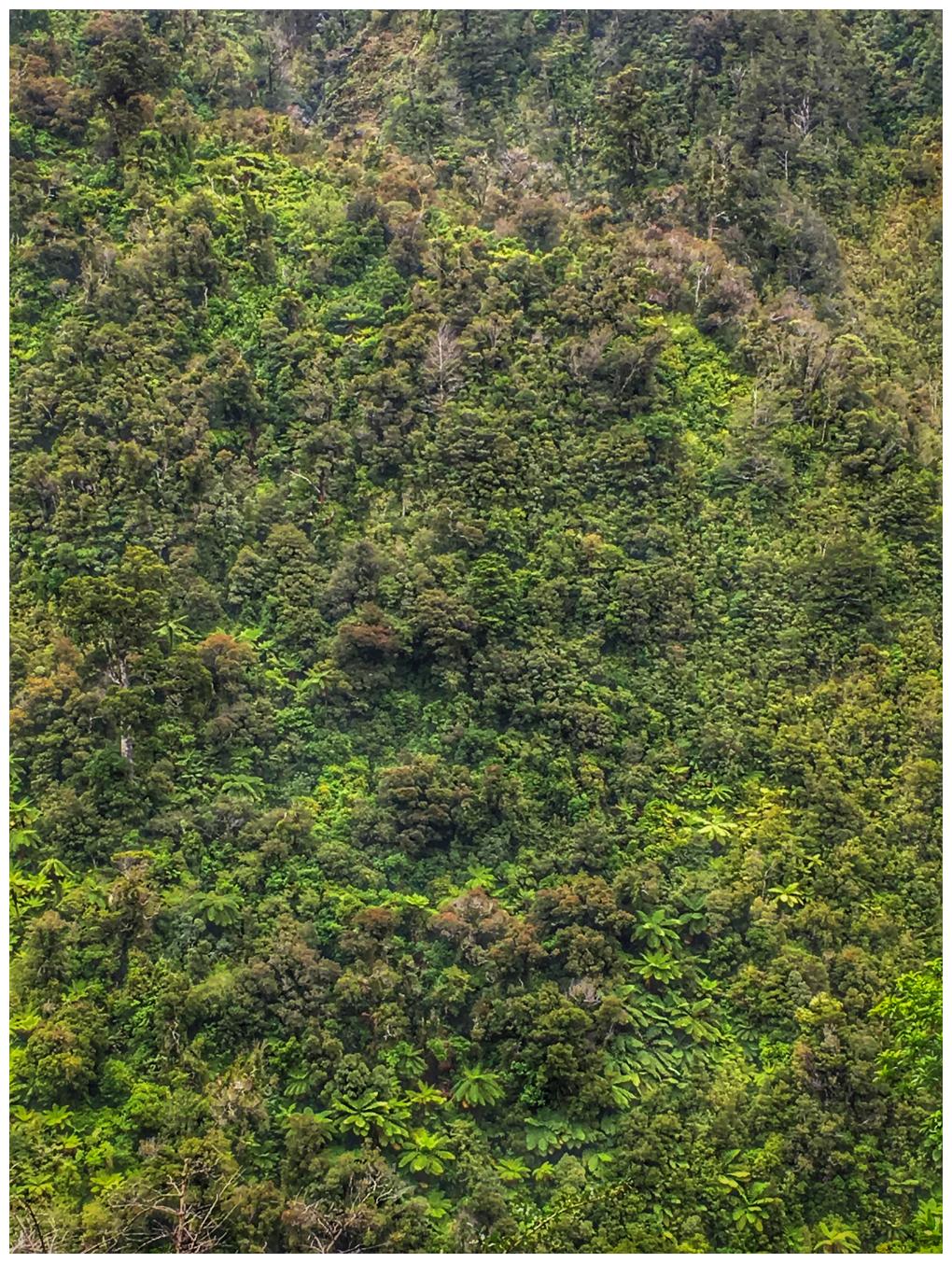 NZ Native Bush