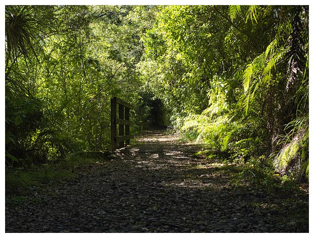 Chasm Creek Walkway