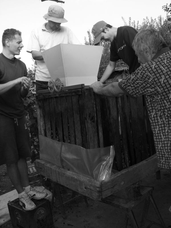 city men making wine...the old way
