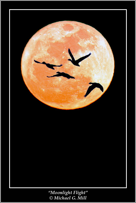 Moonlight Flight