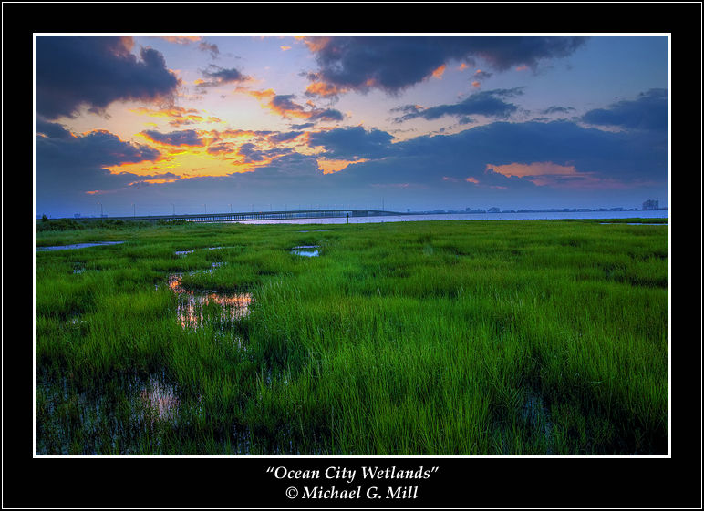Ocean City Wetlands