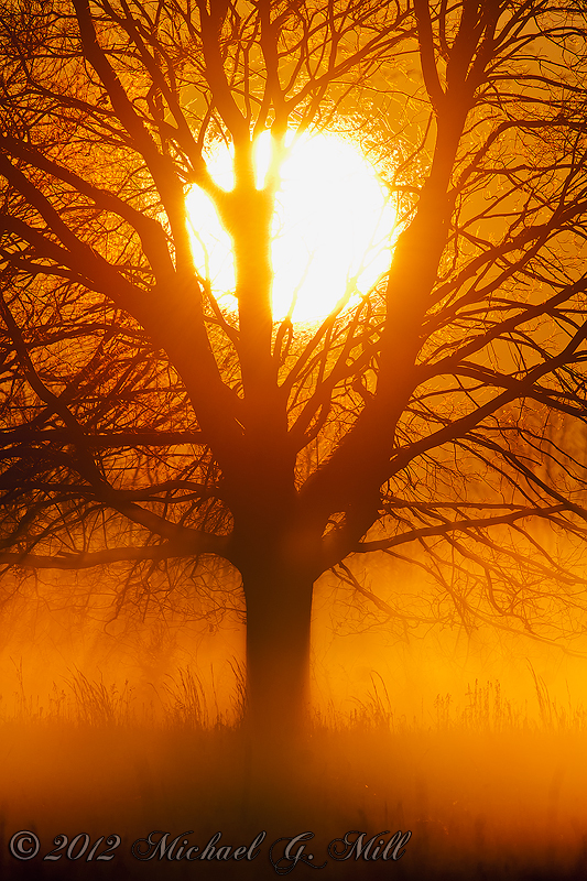 New Dawn, New Beginning, New Year