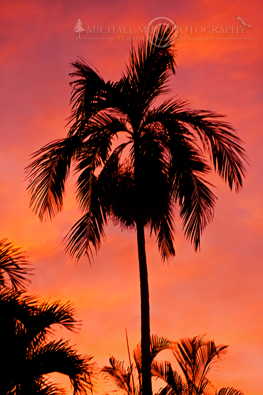 Palm Tree at Dusk
