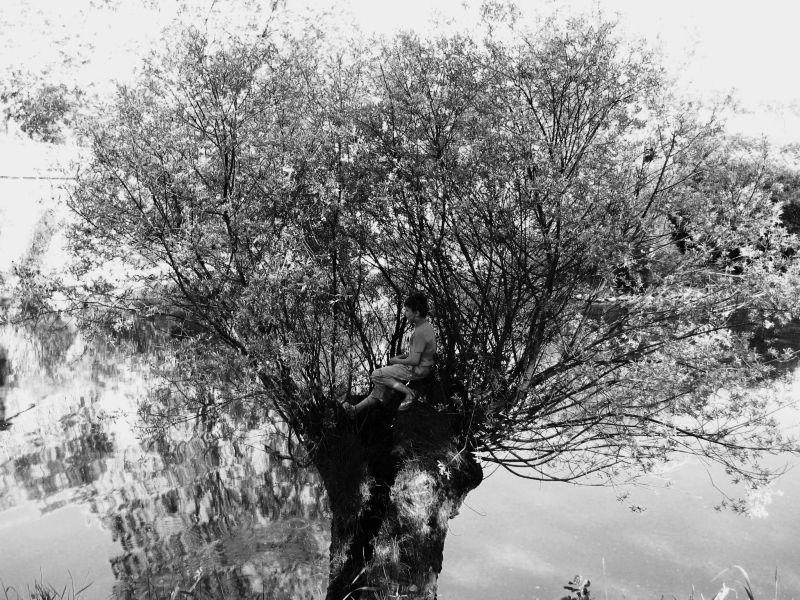 un enfant sur un arbre perché ...