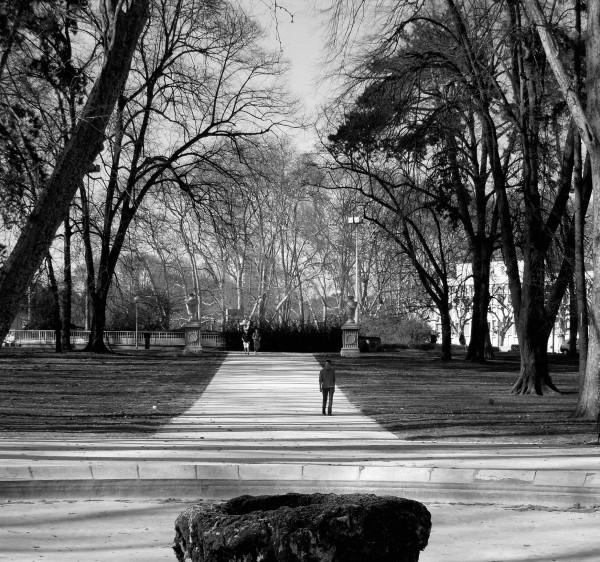 A l'ombre des grands arbres