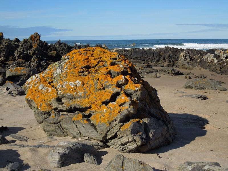 Rock and lichen