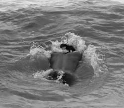 wave , smimmer,