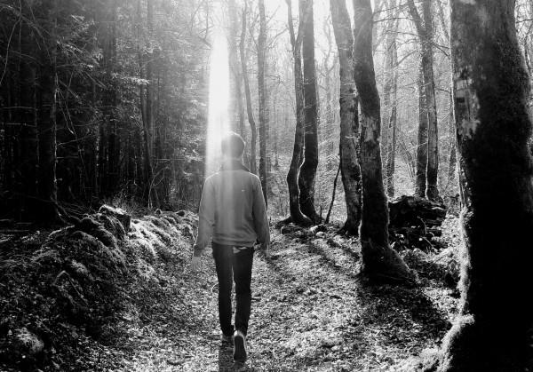 forêt,forest, sun, bim
