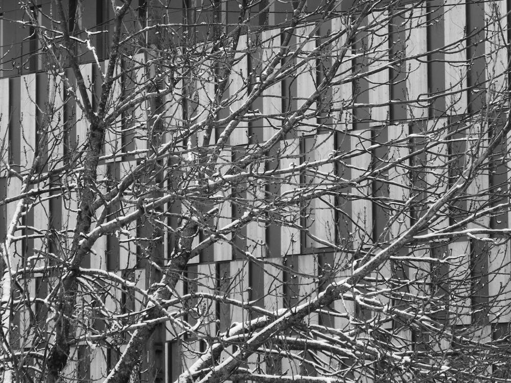 Besançon, cité des arts, neige, snow , arbre