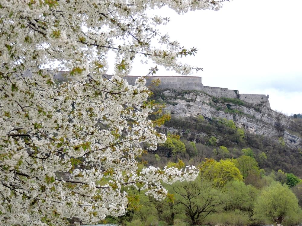 citadel flowers tree spring
