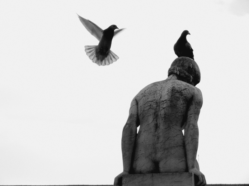 Porto, Portugal, sculpture, pigeons