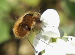 buzzing around