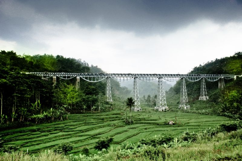 train lines in the middle of rice paddies