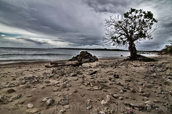 a tree at the seaside