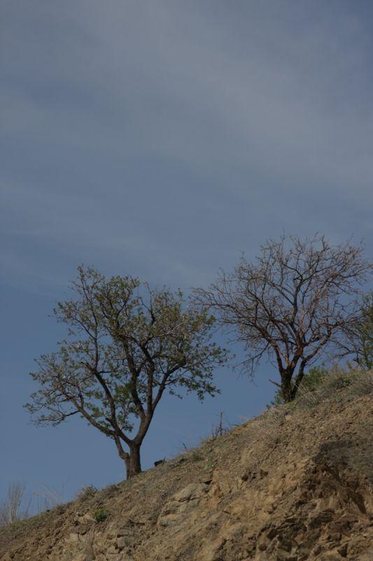 همنشینی در طبیعت