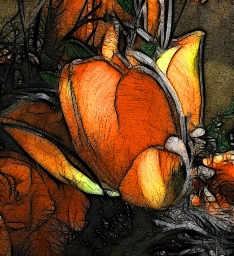 glühende Tulpen