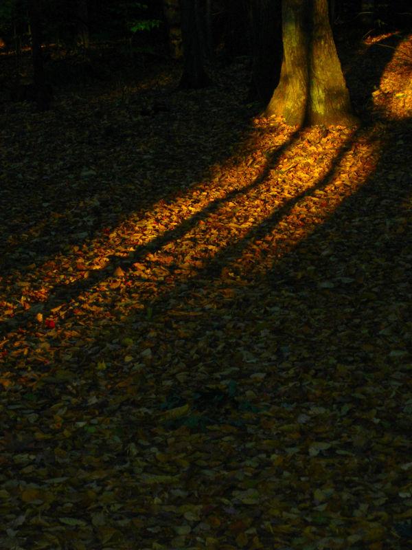 Late Light