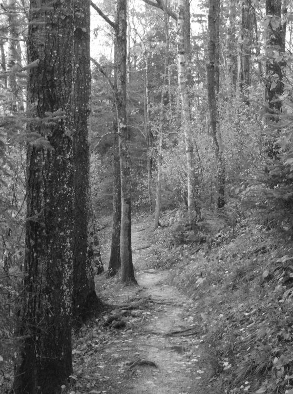 Oberg Mountain trail