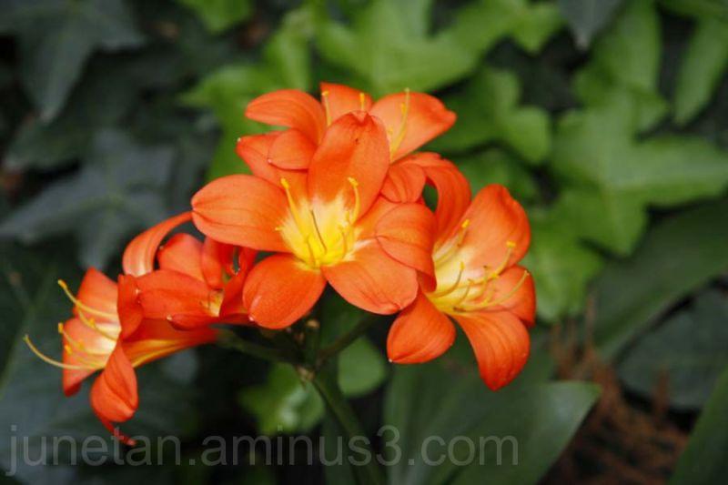 Orange Flower on Green background
