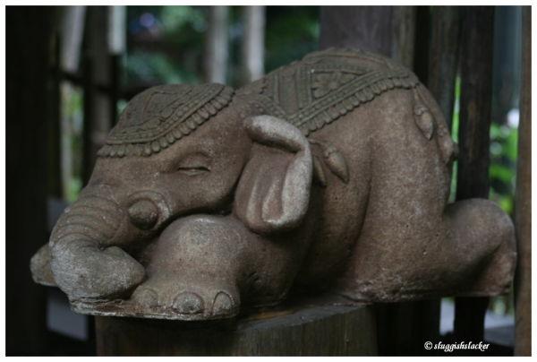 Dozing elephant
