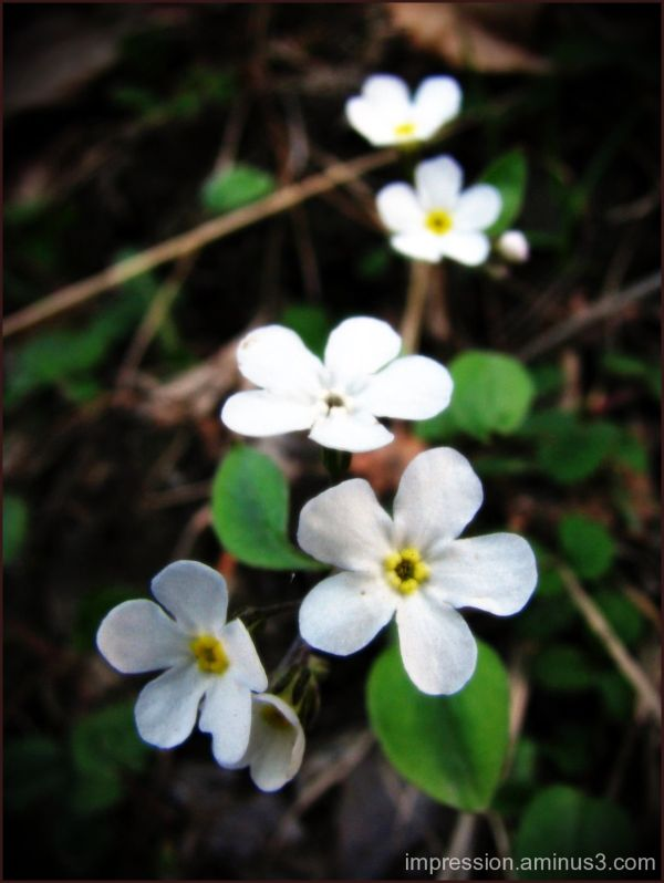 Blosson white