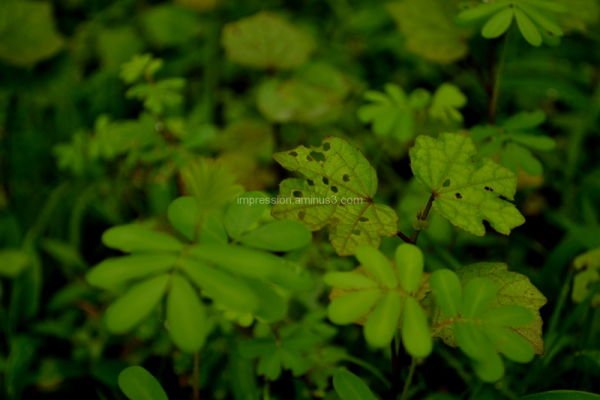 Greenest Green