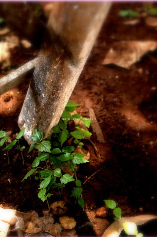 Magic of soil