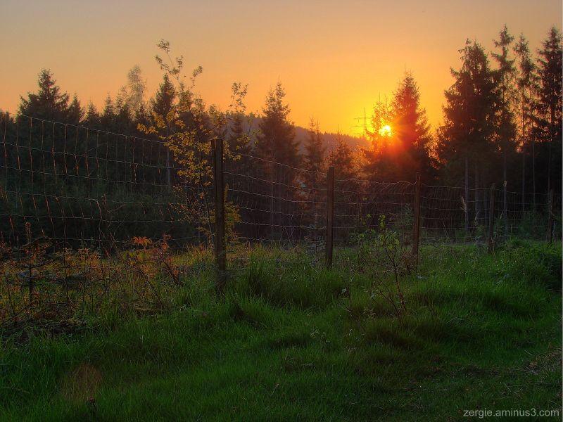 Sunrise in a forest near Lanshut (bavaria)