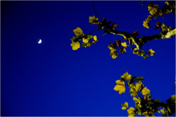 night walk, crescent moon
