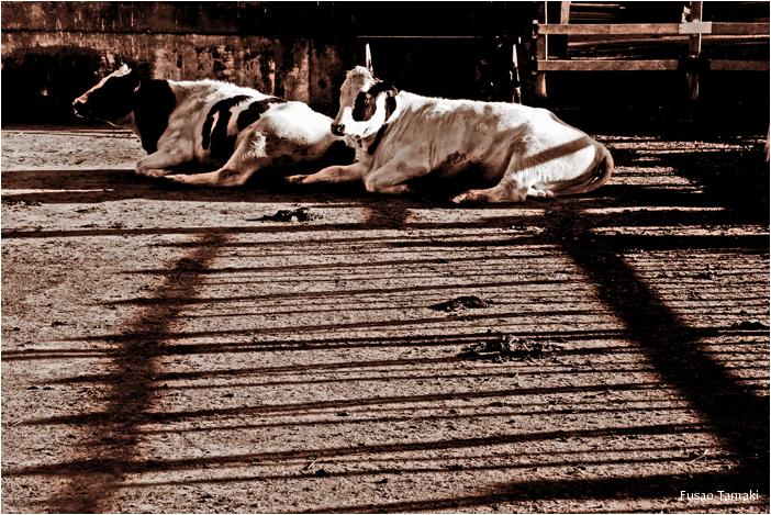 Lazy Sunday Afternoon 2
