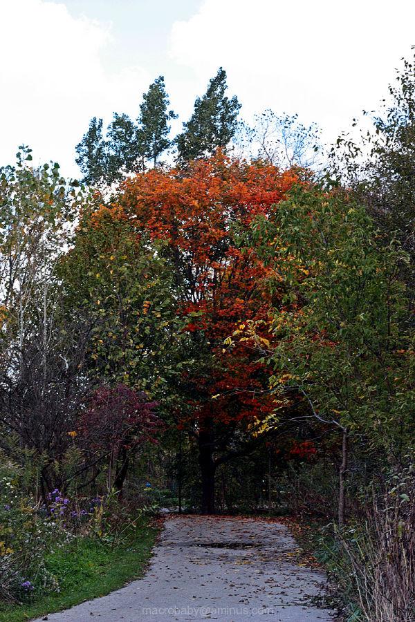Autumn Pleasure