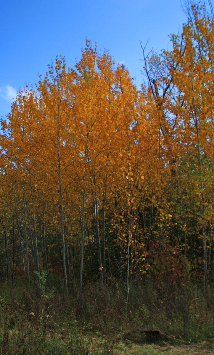 November Colors