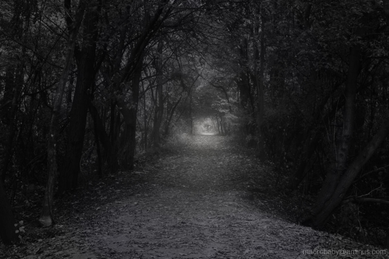 Following Light