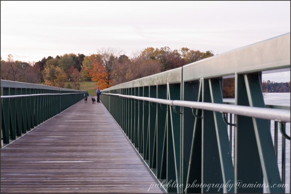 bridge, autumtn, people, dogs, palebluephotography